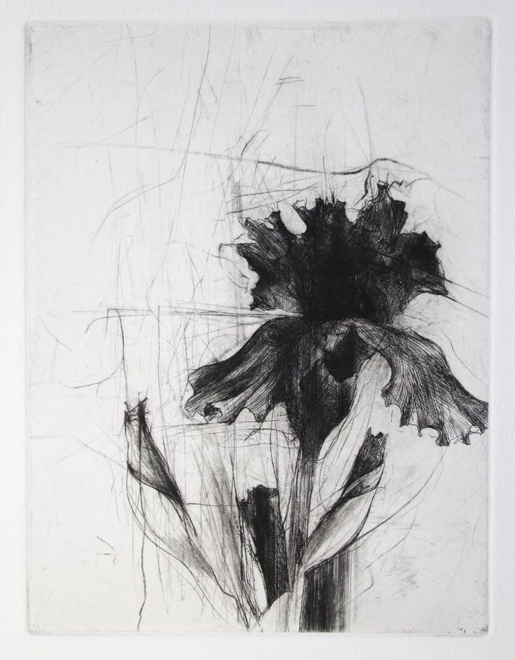 Jake Muirhead. I like how gloomy this is because usually images of flowers are bright and colourful, but this one is the complete opposite and has been almost carelessly drawn with all the scratches in the background around the flower.