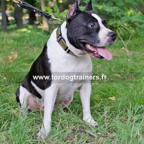 #collier #chien «Galant» en cuir 40 mm de large, orné de plaques couleur vieux bronze et de piques chromées -> 60,80 €  @fordogtrainersf Pensez à mentionner «J'aime» si ce produit vous plaît.