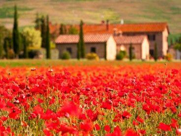 """""""Sotto il Girasole della Toscana by Mamatayoe.  www.mamatayoe.com"""