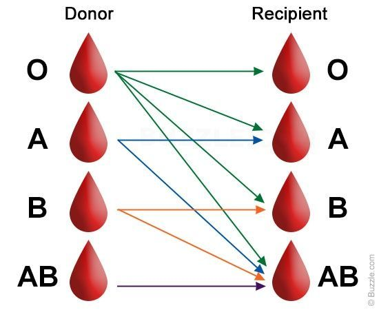 Donate blood and you get a card with your own blood type to carry for any emergency, and you get to feel good. - Compatible blood donors and recipients