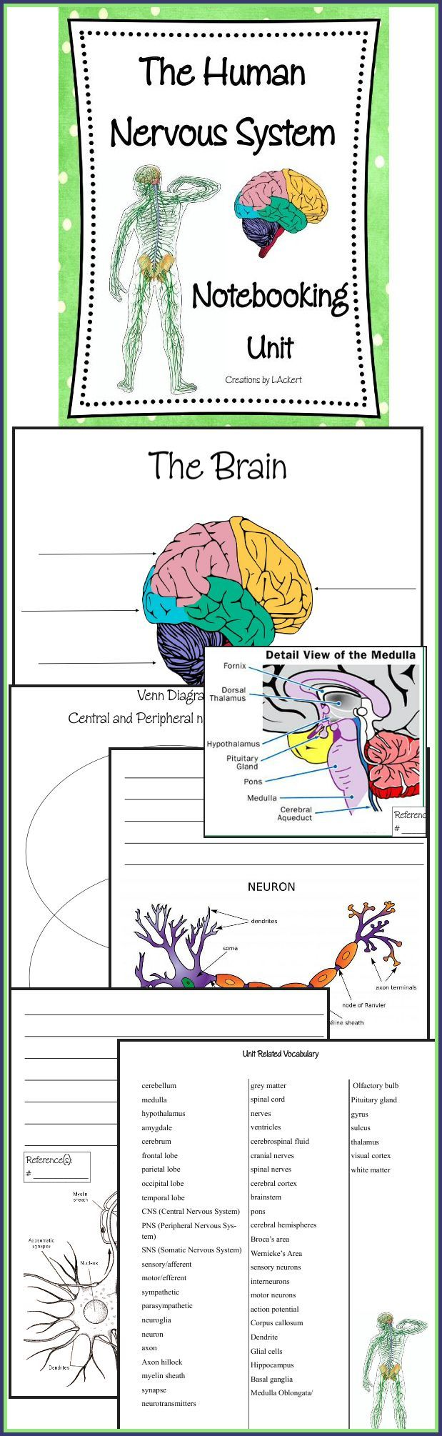 an analysis of the topic of the body systems The human body as conceived by medical science is a system made of systems the body is divided into bodily systems proper, such as the endocrine and circulatory systems these are subdivded into many subsystems at a variety of levels whereby all systems and subsystems engage in massive causal interaction with other systems and subsystems.