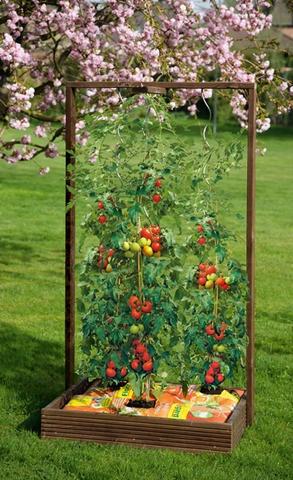 best 25 tomaten pflanzen ideas on pinterest. Black Bedroom Furniture Sets. Home Design Ideas