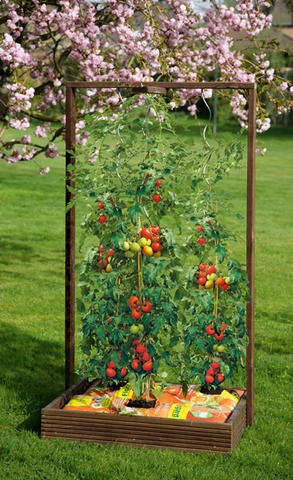 25 best ideas about tomaten s en on pinterest s en. Black Bedroom Furniture Sets. Home Design Ideas