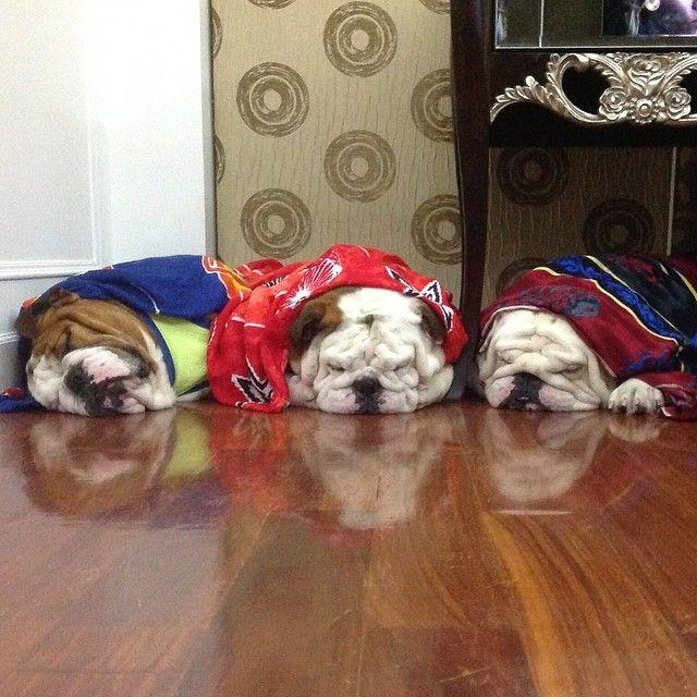 Smooshy Puppies