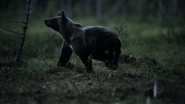"""Award winning wildlife photographer Vincent Munier takes the Nikon D3S on assignment in Norway & Finland capturing the creatures of the Nordic forest in all its glory.   """"Photography can be a powerful weapon in the battle for nature conservation, and now the D-Movie function becomes part of my arsenal.""""   http://mynikonlife.com.au"""