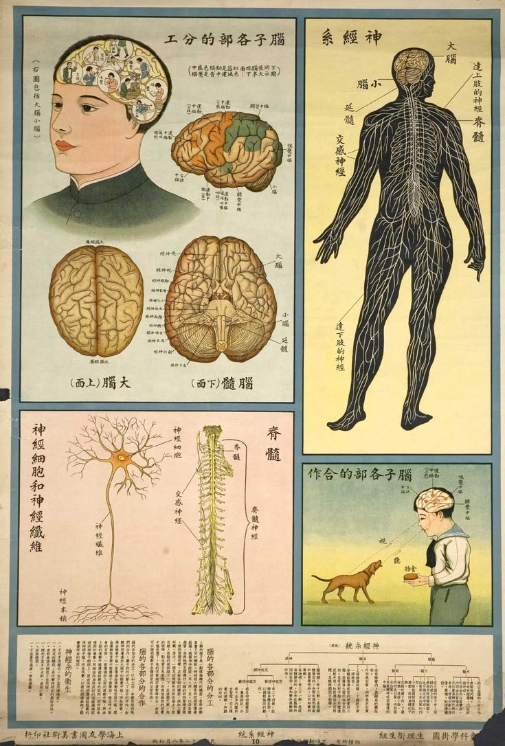 The Structure of Living Things; Stylish Vintage Chinese Public Health Posters