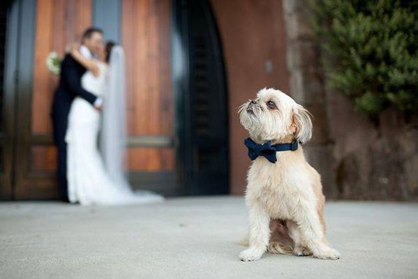 dog in front of the bride and groom