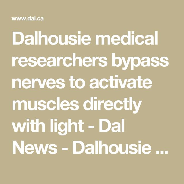Dalhousie medical researchers bypass nerves to activate muscles directly with light - Dal News - Dalhousie University
