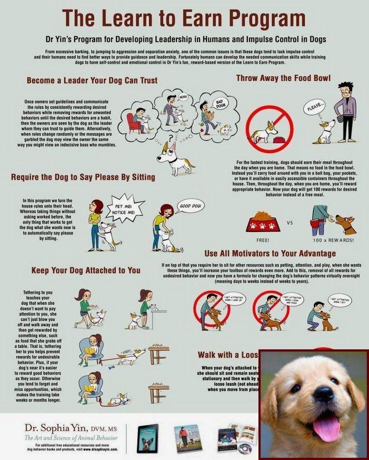 Dog Behavior Reddit And Dog Training Classes Prices