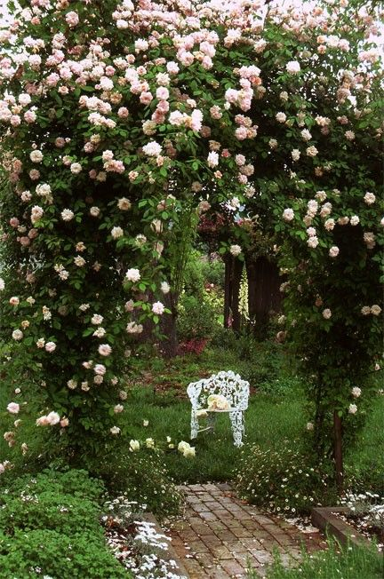 So lovely...My favorite NEW DAWN rose arbor on the cottage grounds