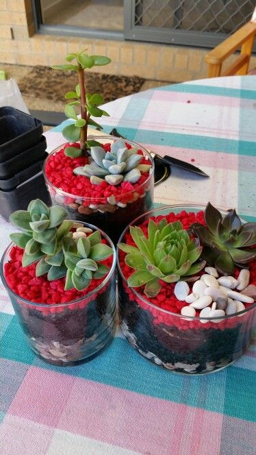Dont know what to do with your used Candle Jars ... try this ... Succulent Terrariums. Party idea, different color rocks