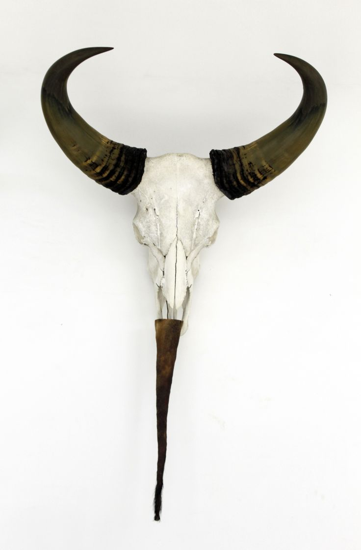 White, buffalo, skull, wall, home, decor