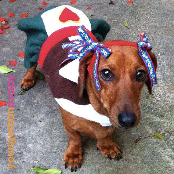 70 best Halloween images on Pinterest   Dachshund dog ...