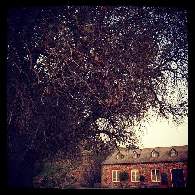 Bethany cellar door, autumn 2014