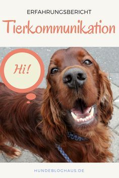 Tierkommunikaktion – kann man mit seinem Hund spre…