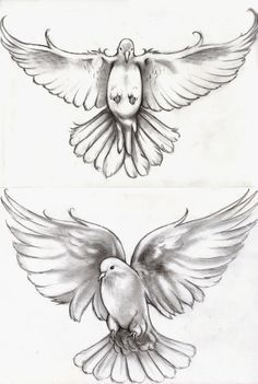 realistic dove drawing - Google Search