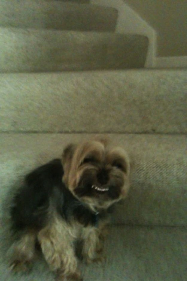 Best Funny Smiles Images On Pinterest Google Search DIY And - 20 ridiculously squishy dog cheeks that will make your day