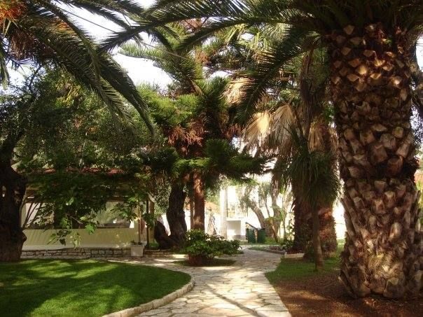 Our garden full of palms, roses, bougainvilleas and other beautiful plants and flowers