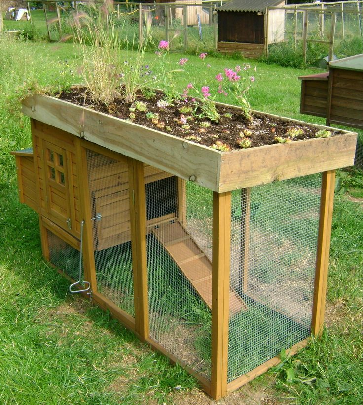 Chicken coop with a garden roof. High enough to keep the pot guts out! (lil bastards eat every thing I plant outside)