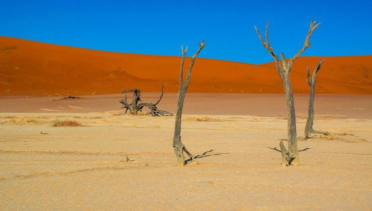 Kale, oude bomen in Deadvlei, Namibië