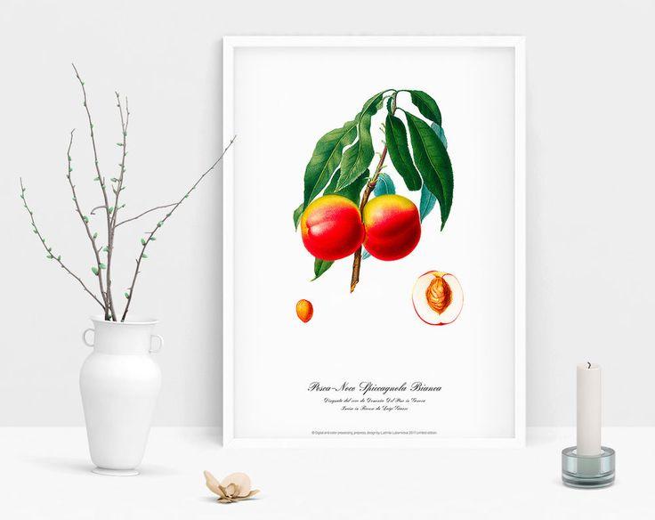 Botanical Peach art print watercolour vintage picture antique poster home poster #Vintage