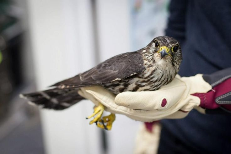 In Pictures: Watch Merlin's Magical Release