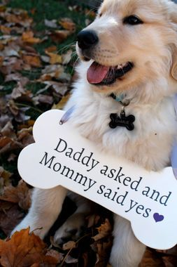 Pup-announced engagement. Awww! http://thestir.cafemom.com/love_sex/187031/16_adorable_ways_to_get