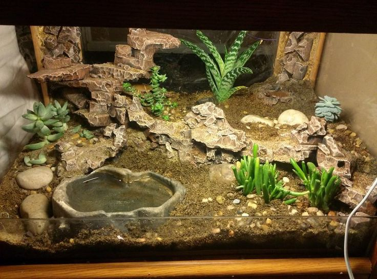 glass top end table I converted into a leopard gecko tank.  the lighting for the image is more intense than their permanent night lighting.