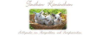 Tinchen Kaninchen