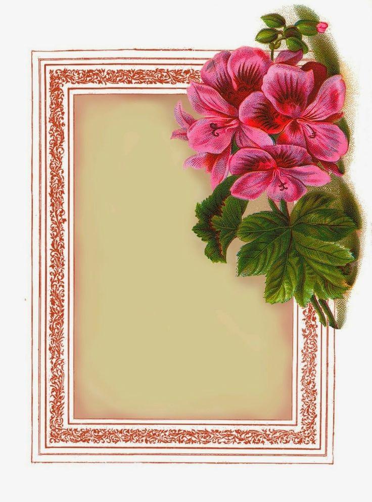 Lilac & Lavender: Summery Pink Geraniums