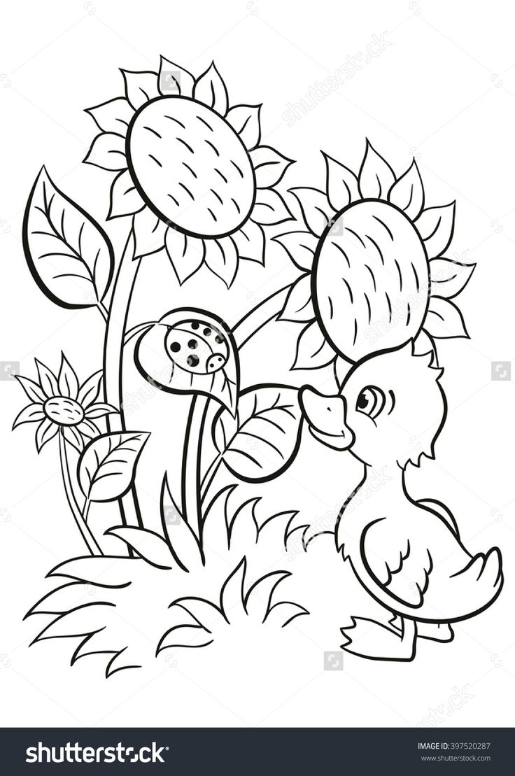 Free coloring pages ugly duckling - Coloring Pages Little Cute Duckling Stands Near The Sunflowers And Looks At The Ladybug