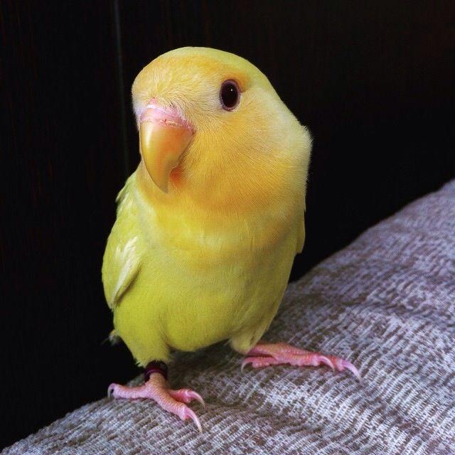 Just a bird