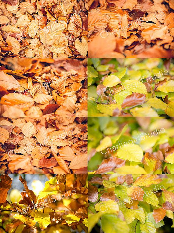 Autumn Leaves / Bundle x 9 Images /Winter by charlenemphotography