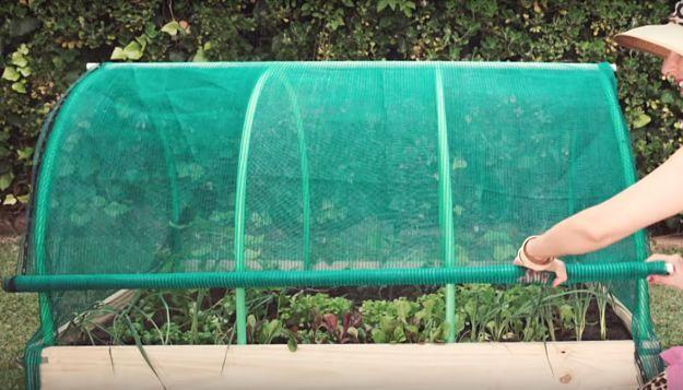 Viola! Homemade Greenhouse Easy As 1, 2, 3   How To Make A Simple And Fun DIY Homemade Greenhouse