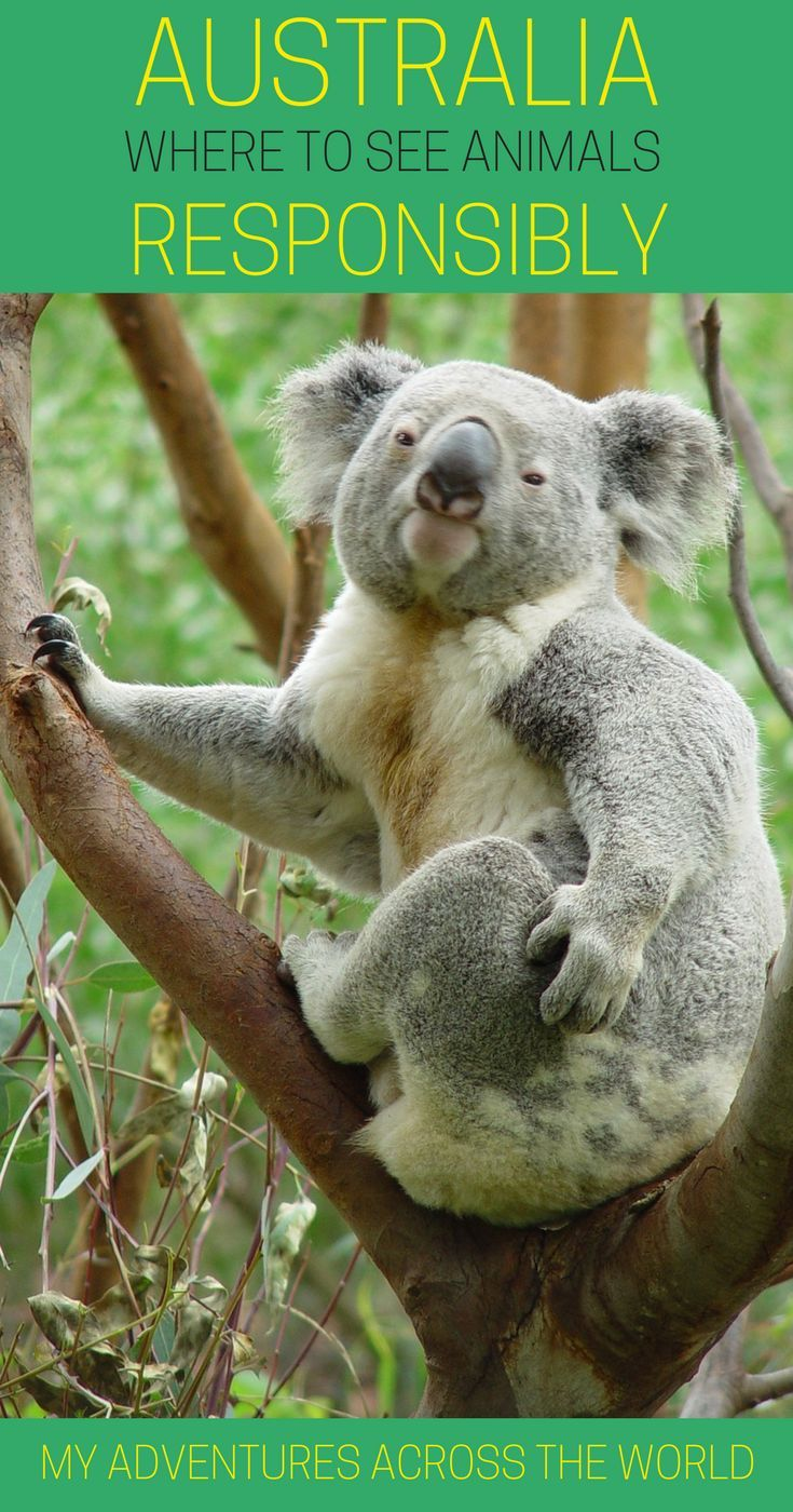 Australia is a paradise for animal lovers. Here's a selection of places for responsible travel in Australia   #australia #responsibletravel #visitaustralia