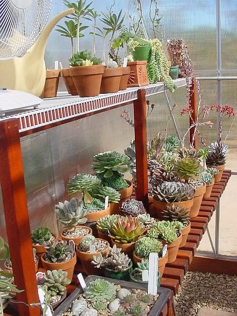 plants on the north side shelves of the greenhouse