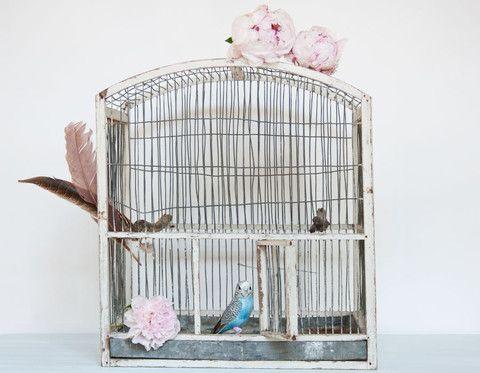 Stort charmerende fransk fuglebur