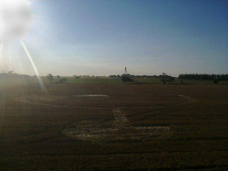 Malabrigo (Santa Fe, Argentina) En medio de un campo de la ciudad de Malabrigo aparecieron unas marcas extrañas sobre un sembradío de trigo. El hecho se constató a unos 500 mts del casco urbano de …