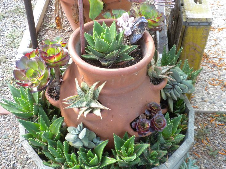17 best images about house plants on pinterest growing Can succulents grow outside