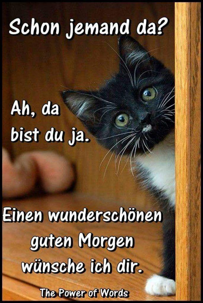 Lustige Guten Morgen Sprüche Fb Good Morning Funny