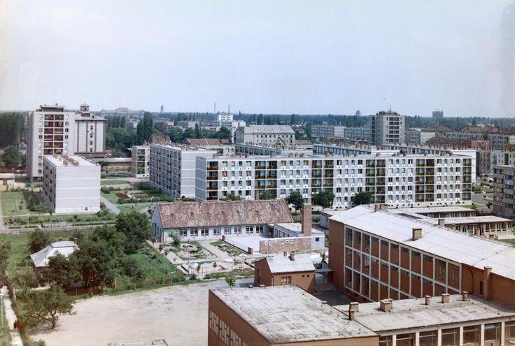 Ibolya utca az Ifjúság utca felé nézve, jobbra az általános iskola (1966)