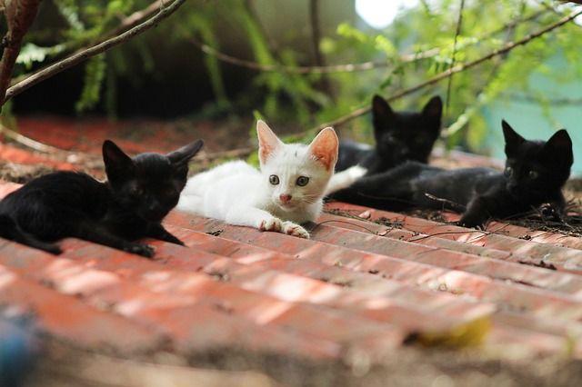 Apa artinya bermimpi tentang kucing? Tafsir mimpi berikut akan menjelaskan makna rahasia dari anak kucing mencakar anda dalam tidur.