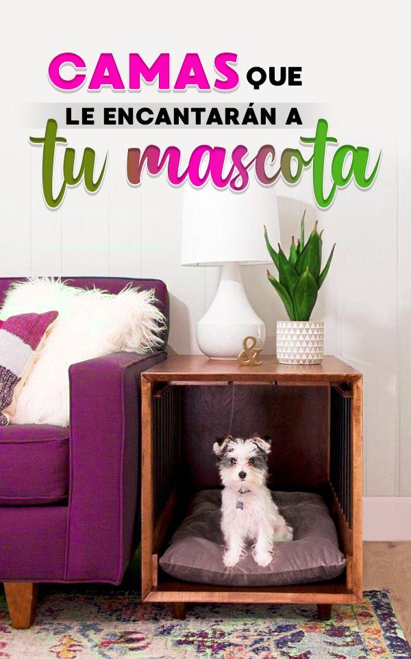 Camitas para mascotas que puedes hacer en casa Ideas Para, Chloe, Kawaii, Cool Stuff, Diy, Home Decor, Frases, Pet Beds, Pretty Pictures