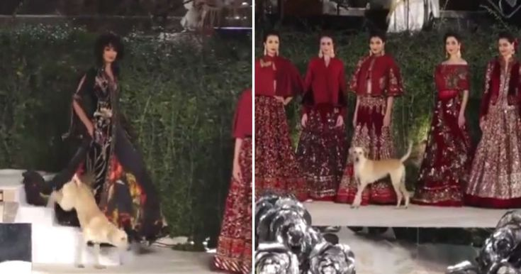Happy Stray Dog Crashes Fashion Show And Upstages The Models