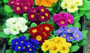 Resultado de imagen para plantas de verano exterior