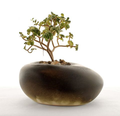 Black Ceramic Sculptural Planter – Shop U