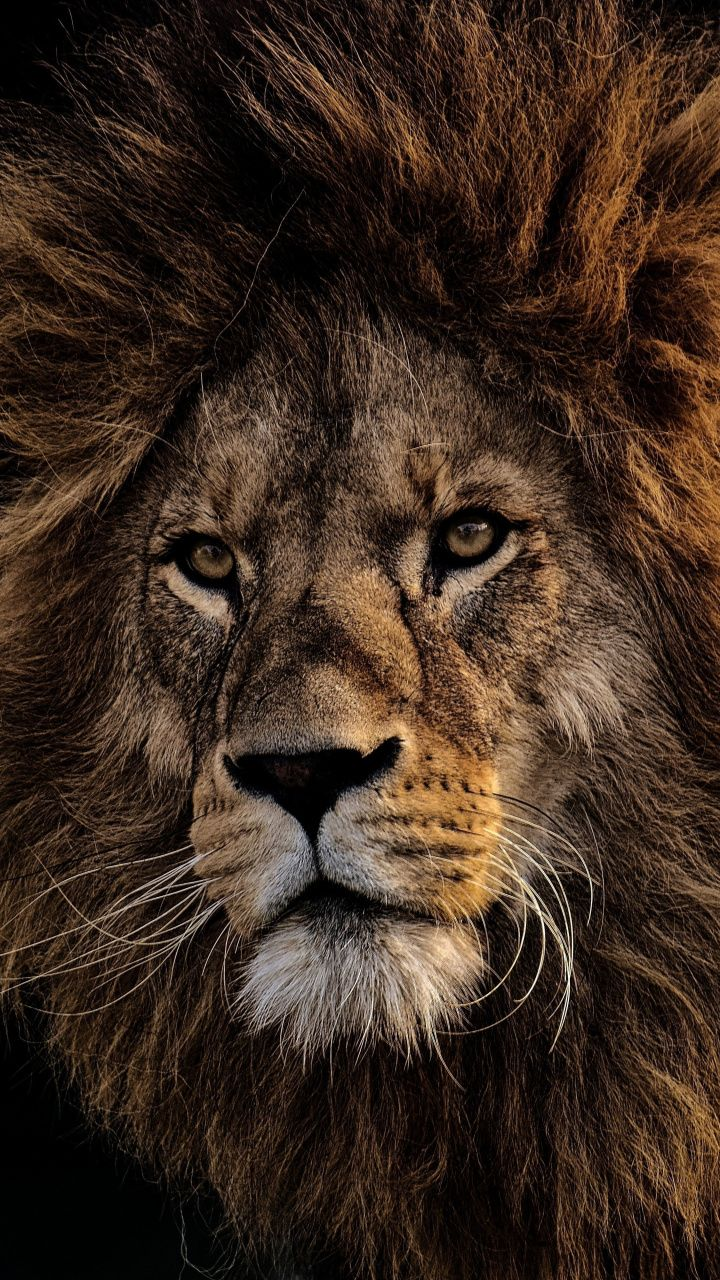 Mighty king, Lion, fur, muzzle, 720x1280 wallpaper