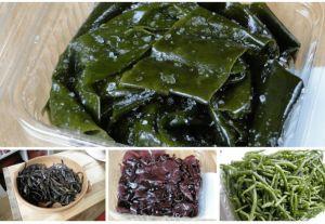 10 Principais Tipos de Algas Marinhas Comestíveis