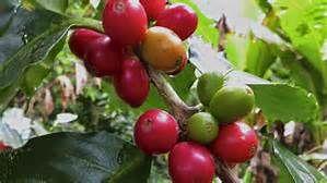 amazon rainforest medicinal plants - Bing images