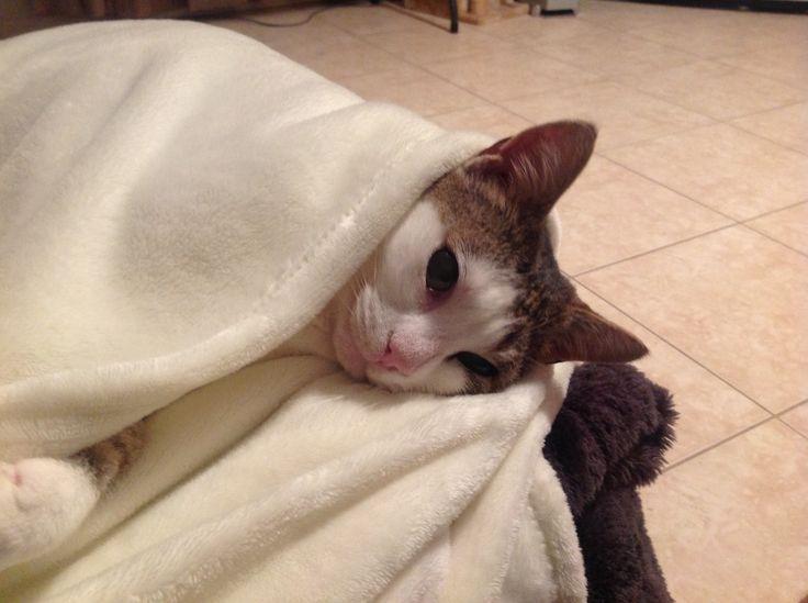 This is sooooooooo.... comfy